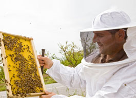 Services for Beekeepers icon